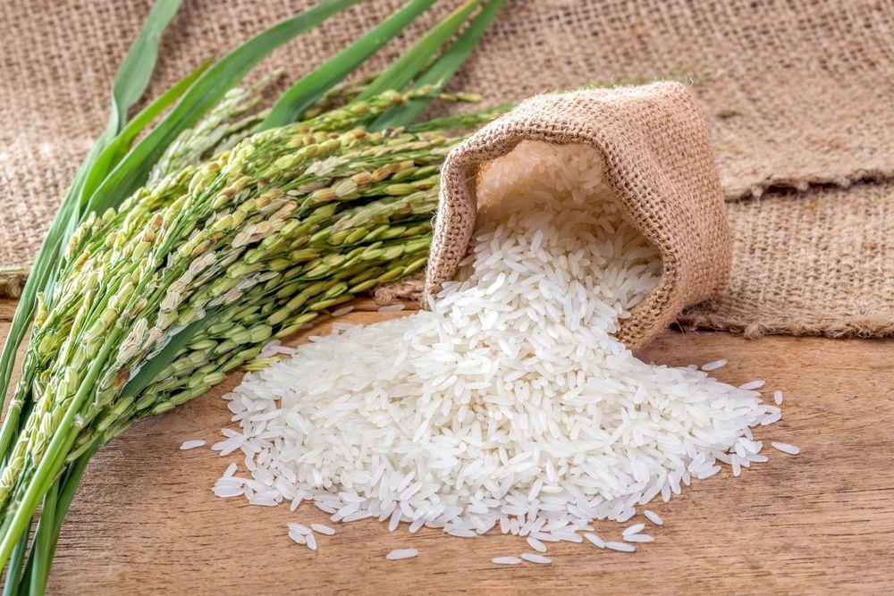 Khởi đầu năm mới, ngành gạo đã nhanh chóng 'tăng tốc'